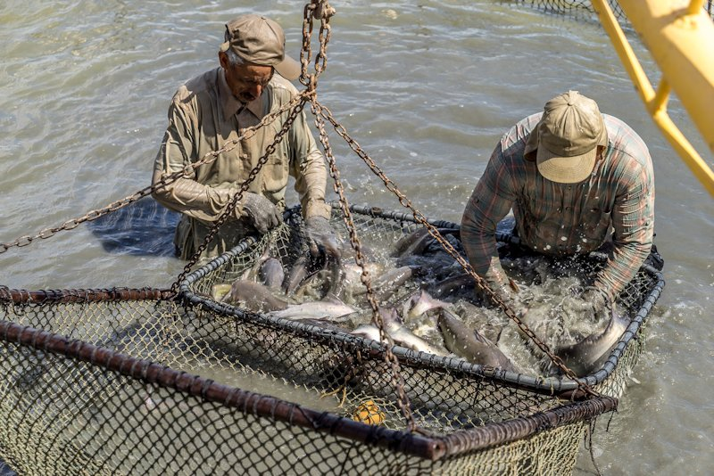 Southern california information for Fish farms in california